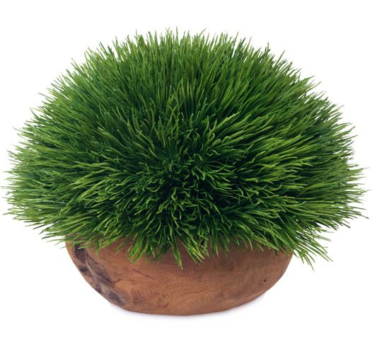 BLOOMS SASSY GRASS
