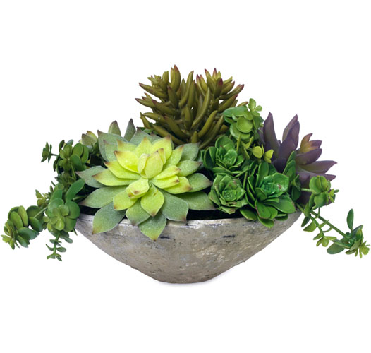 BLOOMS HENS AND CHICKS - PRE-ORDER