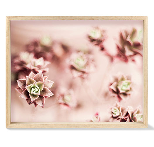 FRINGE STUDIO BLUSH SUCCULENTS TRAY