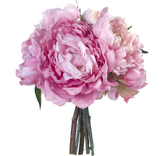 HAND-TIED PINK CHAMPAGNE PEONIES