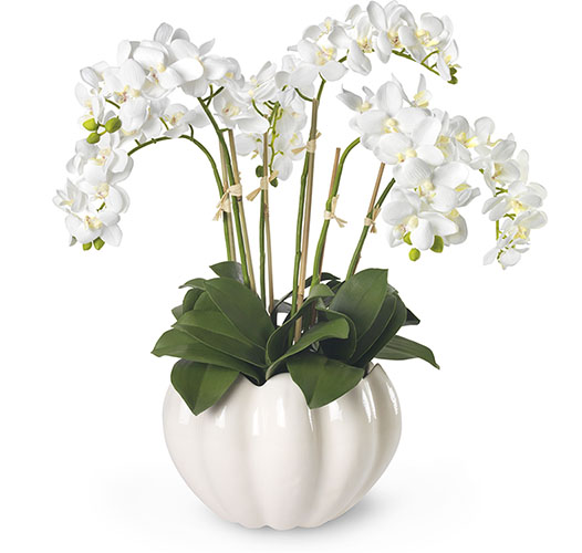 WHITE ORCHIDS IN MIRABELLE CACHEPOT, CREAM