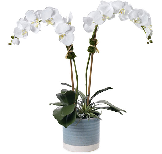 DOUBLE WHITE ORCHID, BLUE CERAMIC VASE - PRE-ORDER