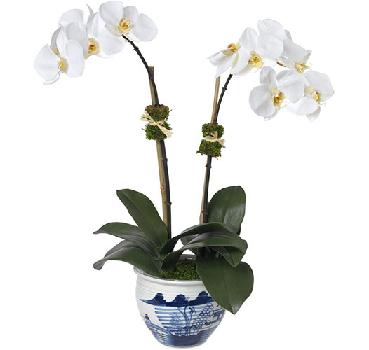 DOUBLE WHITE ORCHID, CHINOISERIE VASE