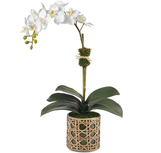 CLASSIC WHITE ORCHID, CANE VASE