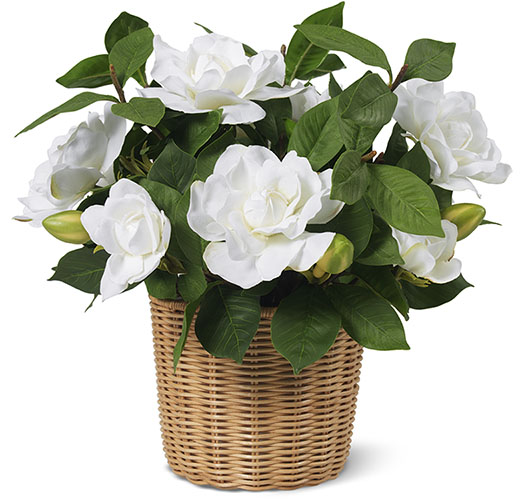 WHITE GARDENIA IN WOVEN WICKER CACHEPOT