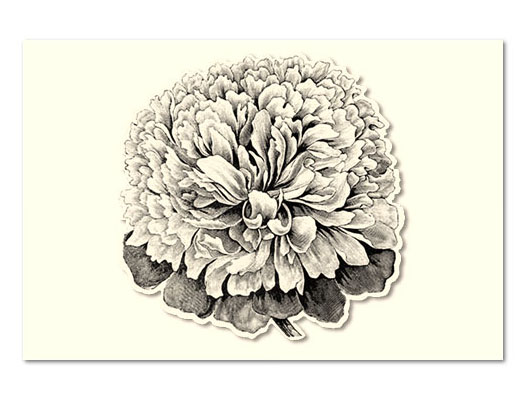 KITCHEN PAPERS DIE CUT PEONY PAPER PLACEMATS