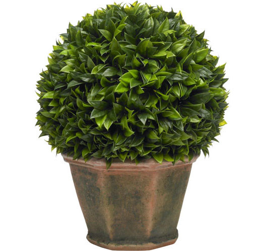 LARGE BAY LEAF TOPIARY